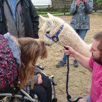 Animal encounters, animal therapy, weddings, Cornwall Talons