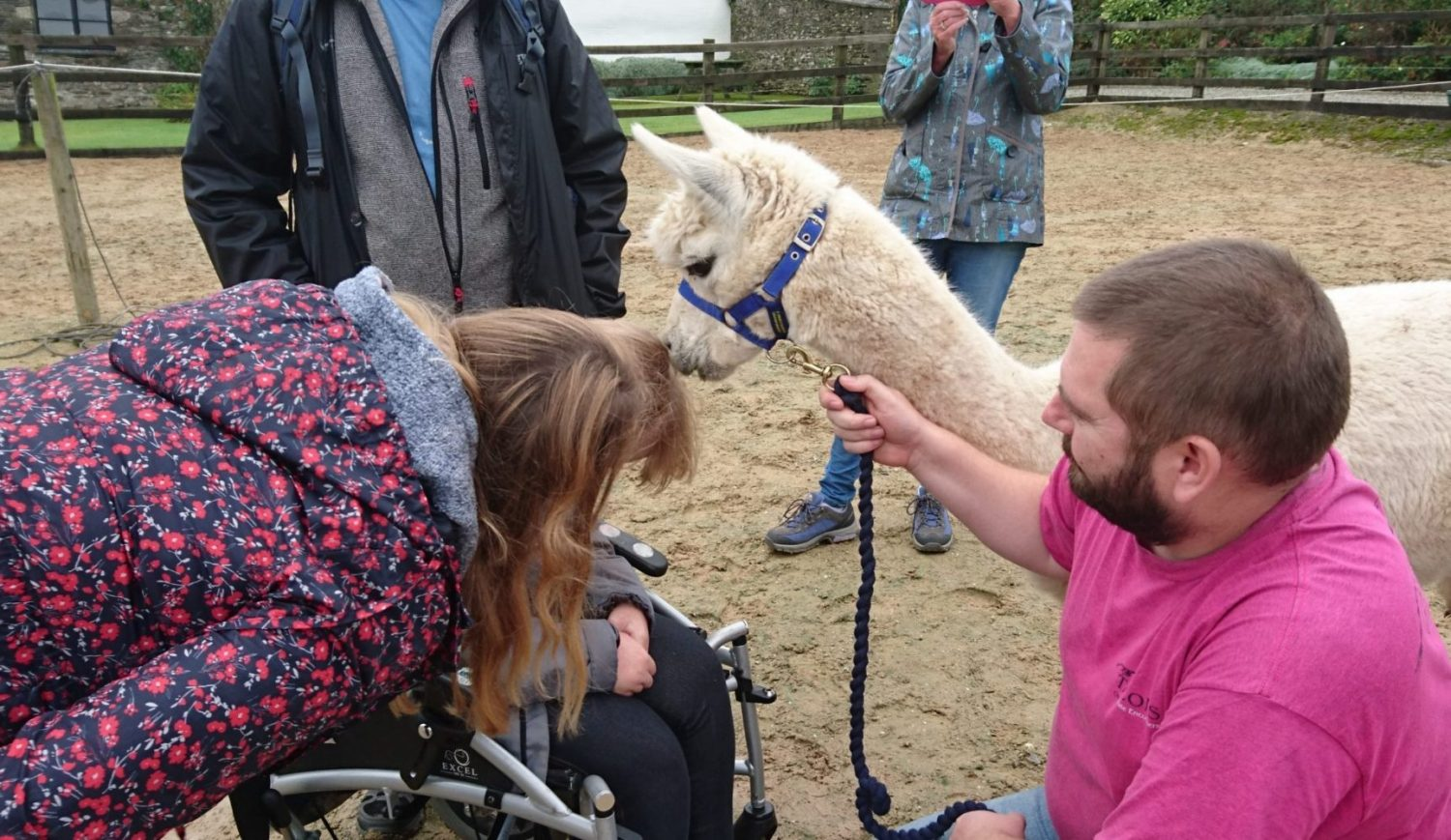 Animal Therapy for disabled Cornwall Talons