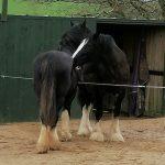 Heavy Horse Encounter, Therapy, Talons, Cornwall